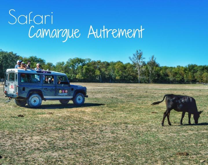 Safari en Camargue