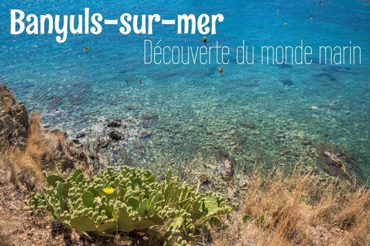 A la découverte du monde marin àBanyuls